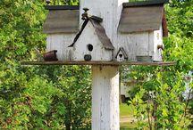 Birds,Bees and Butterflies in the garden