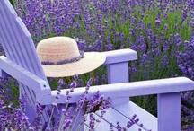 Bleu Lavande / All things lavender...