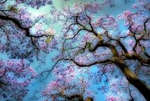Color hue- Blue