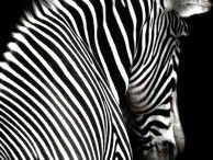 Black and White / by Liska Jewell