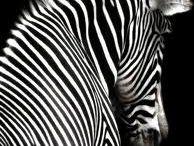 černobílá x black and white