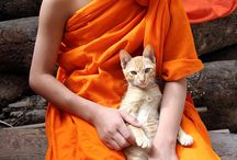 Monk and cat