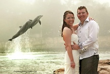 Discovery Cove Weddings / Weddings