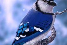 Birds of the world / birds