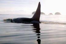 orca ❤️