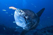 El gran azul / Submarinismo