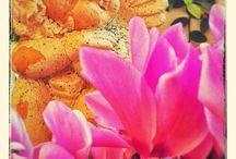 maria / primavera