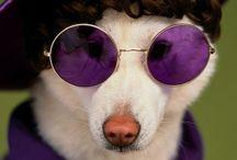 #Purple & #Violet