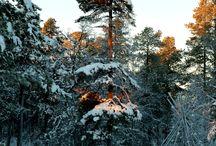 Talvi Lapissa * Winter in Lapland