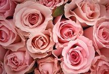 Flower Power / La nature fait des merveilles ...