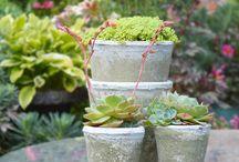 Pot displays