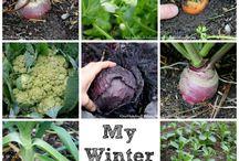 Vinter afgrøder / Hvad kan vokse om vinteren.