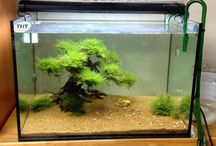Bonsai Driftwood Aquarium created by customers / Bonsai Driftwood Aquarium created by customers   Looking for the right Bonsai Driftwood to start your miniaturised underwater tree ?   EXOAQUARISTIC- HOME OF BONSAI DRIFTWOOD AUSTRALIA   Visit: http://www.exoaquaristic.com.au/ for a large variety of Bonsai Driftwoods , Plants and Aquascaping Products