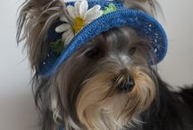 Панама для собак