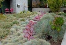 california.yard&garden / Great ideas for your California yard and garden!