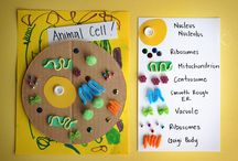 Science: Life Science / Cells, kingdoms, environment