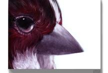 birds / feathers