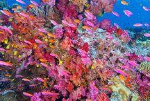 熱帯魚  魚介類