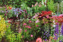 Cutflower garden