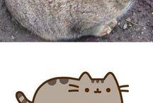Macskák♡