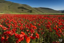 Castelluccio di Norcia 2015 - Insight / carpets of flowers
