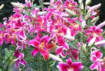 FAVORITE FLOWERS / by Elizabeth Bonilla
