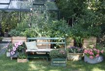 Copenhagen Urban Farming / This is my life as an urban farmer in Copenhagen. Read my book (in danish) Eat Your Garden (Spis din have)