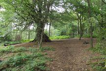 Beeches Wood / A walk around Beeches Wood in Mitcheldean.