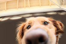 Dogs / by Jill Czarnik