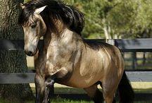 Horses / by Sherry Kindopp