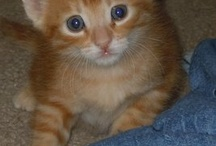 Kittens / Started with the babies from recent litter announced on FB on 5/31/12, then kept growing the way that the love of cats will...  / by Toni Shiffman