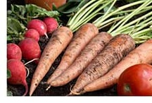Herbs/Fruits/Vegetables Garden