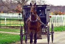 Amish Life / by Marcia Merritt