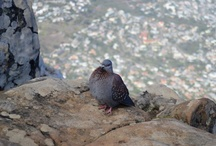 My Photos: Cape Town