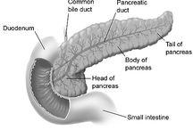 My Cranky Panky / Pancreas Disease Awareness, Pancreatitis / by Christy Dias
