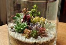 kaktus dlm gelas