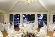 Tree Top Room