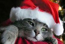 Christmas Kitty's