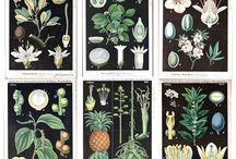 #Laminas Botanicas / series para imprimir! y vender laminas botanicas!