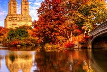 New York, New York / by Kandice Michelle Young, Author