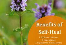 Herbal Materia Medica