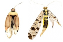 Natural forms - insects / by Tom Lee
