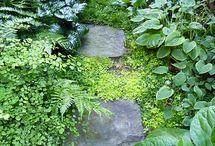 Jardin verdoyant / Allée en pierre fouilli.