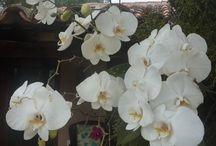 Jardin, plantas, flores / Naturaleza / by Maria Jose Elton