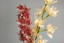Great Flower Deals / by Coady Florist
