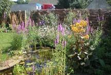 Vlindertuinen - butterfly gardens