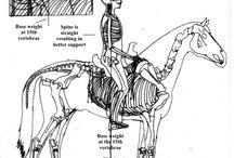 Sherlock / Riding Westernstyle