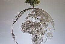 trees by Fotochannels / drzewa i ich kształty