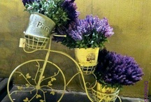 Pretty Bicycles