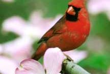 Birding--lifetime list / My lifetime sighting list